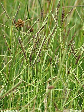 Gras, Golf bei Olympia – voll Gras!, Golfsport.News, Golfsport.News
